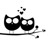 owl in love