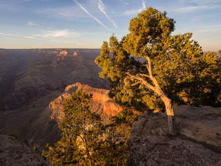 Tree at Grand Canyon