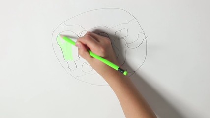 child hand draws the earth