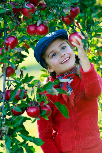 Apple orchard - cute girl picking ripe apples