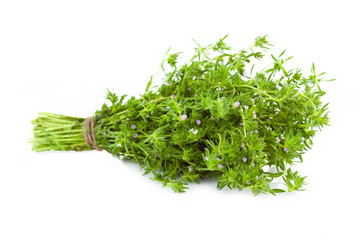 Bunch of fresh Thyme /  isolated on white