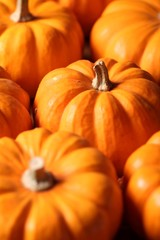 Closeup of  many small pumpkins.