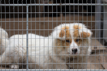 portrait of a dog behind bars