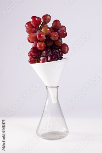 Grape Science