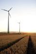 canvas print picture - Windpark und Getreide im Sommer