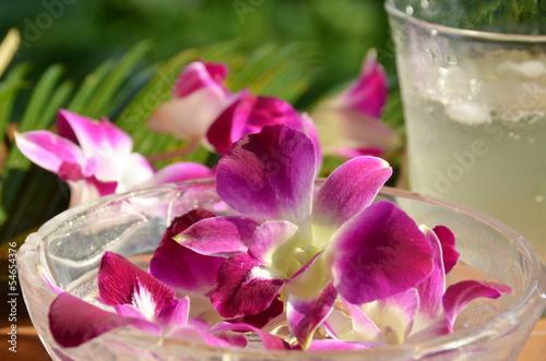 Fototapeten,orchidee,blume,trinken,apfelsinenbaum