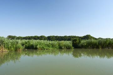 fiume micio