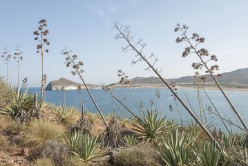 Cabo de Gata, Almeria. Andalucia,