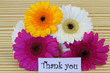 Thank you note with colorful gerbera daisies
