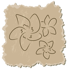 Vector frangipani on a brown cardboard background