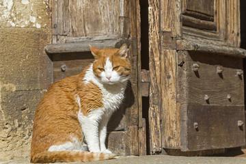 Katze  vor Kirchentüre