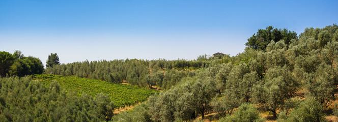 Campagna Toscana