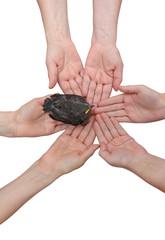Blackbird on hands together-vertical