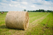 Round hay bales on a meadow