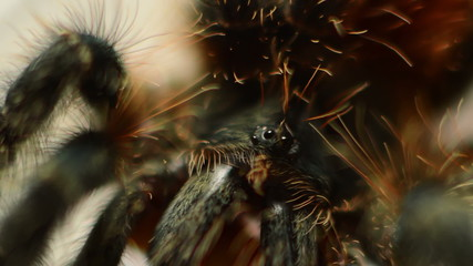 tarantula and  worm macro