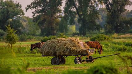 grazing horse