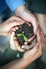 Hands surround of soil with plant