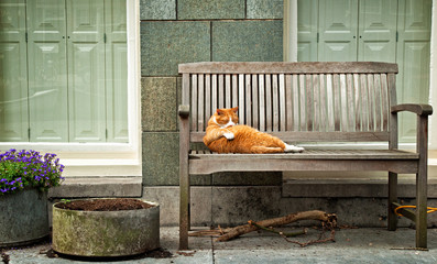 Sleeping red cat on bench
