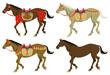 Four types walking horses