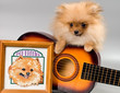 Pomeranian with a guitar