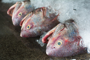 A group of fish ready to Wholesale in fish market in Thailand