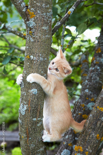 Red kitten on a tree in the afternoon