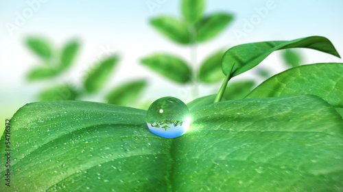 Dewdrop on leaf, Beautiful animation. HD 1080.