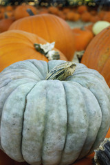 Light Gray Pumpkin