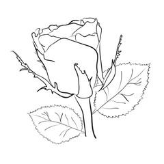 рисунок маленькой розы на белом фоне