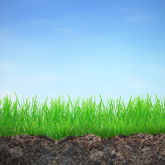 Grass in dirt