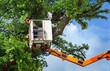 Arbeiter bei Baumrückschnitt mit Hubsteiger - 54726567
