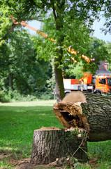Gefällter kranker Baum im Stadtpark