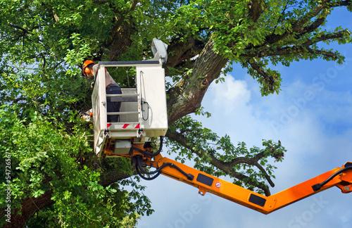 Arbeiter bei Baumrückschnitt mit Hubsteiger