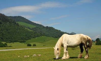cheval sur le plateau - Béarn