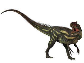 Allosaurus Isolated