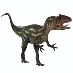 Allosaurus on White