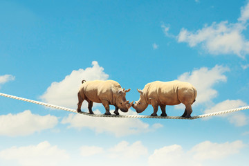 Two rhino walking on rope