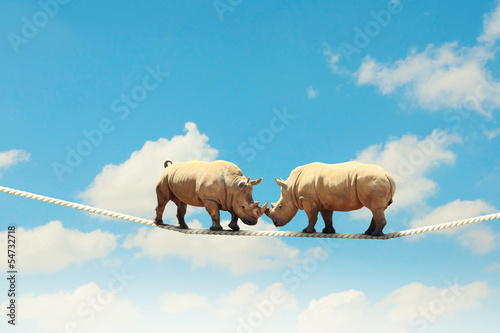 Foto op Canvas Neushoorn Two rhino walking on rope
