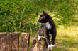 Katzenkind balanciert auf altem Holz im Grünen