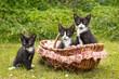 Neugierige Katzenbabies mit Korb auf Wiese