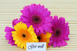 Get well note with colorful gerbera daisies