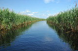 Water channel in the Danube delta