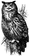 Bird Eurasian Eagle-Owl