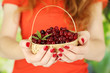 Woman hands holding basket of ripe red cranberries, close up.