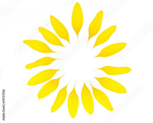 Leinwanddruck Bild Ein Kreis aus Sonnenblumenblütenblättern