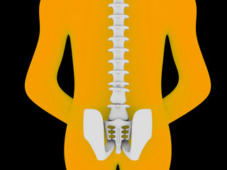 3d rendered medical illustration of pelvis and spine