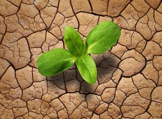 Pflanze auf trockenem Boden