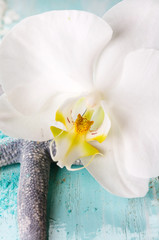 Starfish with white orchid
