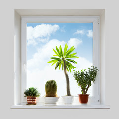 House plants on the windowsill.