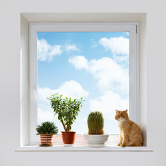 Cat and house plants on the windowsill
